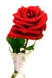 红色玫瑰唯一茎 库存图片
