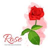 红色玫瑰在白色背景隔绝的传染媒介例证 免版税库存图片