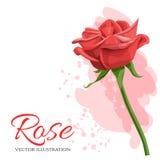 红色玫瑰在白色背景隔绝的传染媒介例证 库存照片