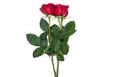 红色玫瑰在白色裁减路线隔绝的花束花包括 免版税库存照片