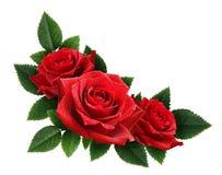 红色玫瑰开花壁角安排 免版税库存照片