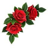 红色玫瑰开花壁角安排 免版税图库摄影