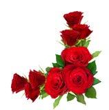 红色玫瑰开花壁角安排 库存图片