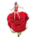 红色玫瑰的妇女 库存图片