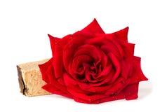 红色玫瑰肥皂草本温泉概念白色背景 库存照片