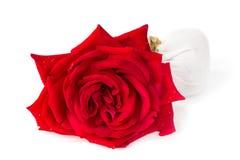 红色玫瑰肥皂草本温泉概念白色背景 免版税库存图片