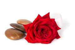 红色玫瑰肥皂,草本温泉概念白色背景 免版税库存照片