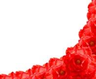 红色玫瑰色花框架 免版税库存照片