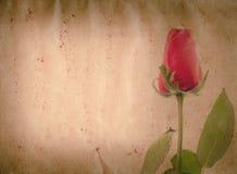 红色玫瑰色花老grunge纸张 免版税库存图片