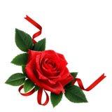 红色玫瑰花和丝绸丝带安排 图库摄影
