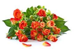 红色玫瑰花束  库存照片