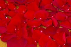 红色玫瑰花瓣。 免版税图库摄影