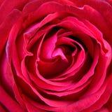 红色玫瑰花瓣特写镜头 免版税库存图片