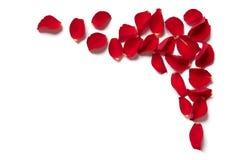 红色玫瑰花瓣边界 库存图片