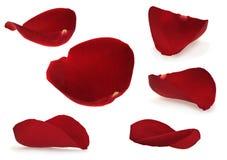 红色玫瑰花瓣 库存照片