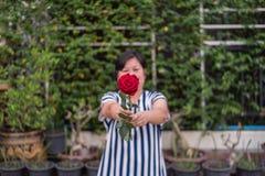 红色玫瑰花用人的手在Valentine& x27; s天 免版税图库摄影