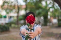 红色玫瑰花用人的手在Valentine& x27; s天 库存图片