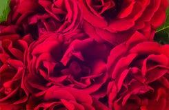 红色玫瑰花的布置 免版税库存照片
