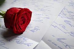 红色玫瑰谎言 库存图片