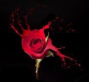 红色玫瑰飞溅 免版税库存照片