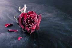 冻红色玫瑰 免版税库存图片