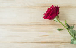 红色玫瑰38 库存图片