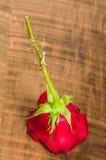 红色环形玫瑰色婚礼 图库摄影