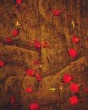 红色瓣晚上照片在春天 免版税图库摄影