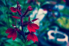 红色瓣-宏指令 图库摄影