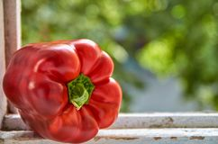 红色甜椒关闭在被弄脏的五颜六色的绿色背景的木白色桌上与拷贝空间 免版税库存图片