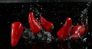 红色甜椒, annuum的辣椒的果实,落在水的菜反对黑背景, 股票视频