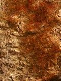 红色生苔在石墙上在春天 库存照片
