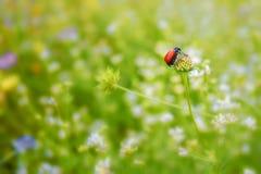 红色甲虫细节在植物的 库存图片