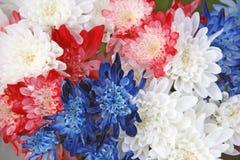 红色白色蓝色菊花花花束 库存图片