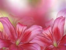 红色百合花,在红色桃红色被弄脏的背景 特写镜头 库存图片