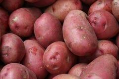 红色的土豆 免版税库存照片
