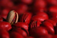 红色的开心果 库存图片