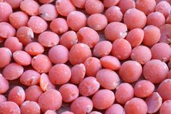 红色的扁豆 免版税库存图片