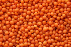红色的扁豆 库存图片