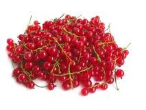 红色的无核小葡萄干 免版税库存照片