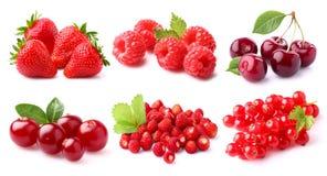 红色的浆果 库存照片