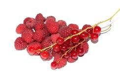 红色的浆果 图库摄影