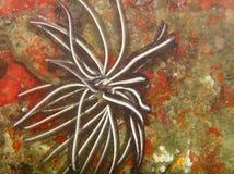 红色的珊瑚 图库摄影
