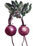 红色的甜菜 免版税图库摄影