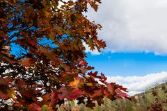 红色的秋天,褐色叶子和蓝色skys 库存照片