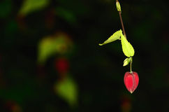 紫红色的花 免版税图库摄影