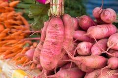 红色的萝卜 免版税库存照片