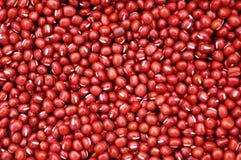 红色的豆 库存照片