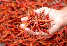 红色的辣椒 免版税库存图片