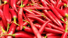 红色的辣椒 免版税图库摄影